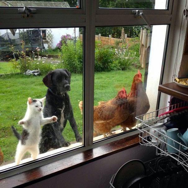 animales_entrar_casa_1