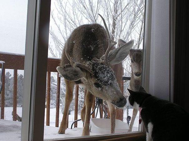 animales_entrar_casa_10
