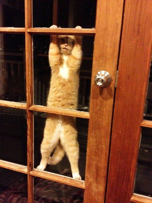 animales_entrar_casa_11