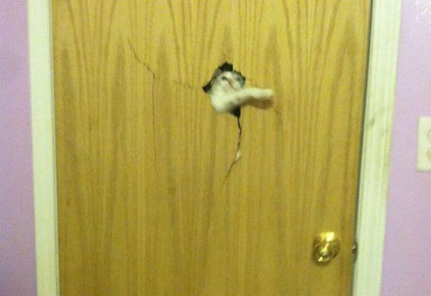 animales_entrar_casa_13