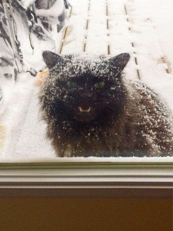 animales_entrar_casa_15