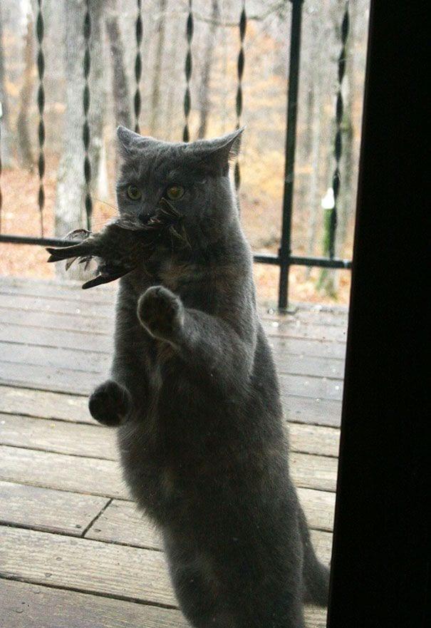 animales_entrar_casa_16