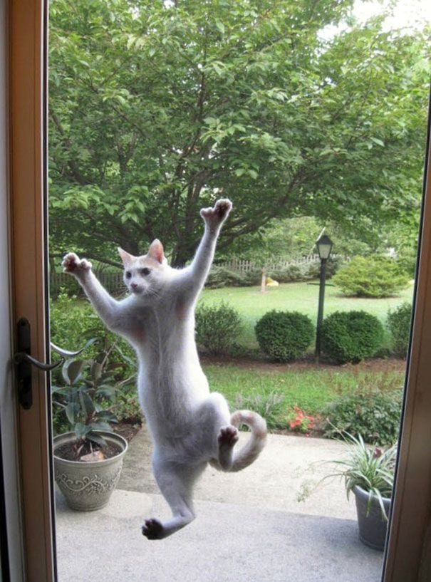 animales_entrar_casa_17