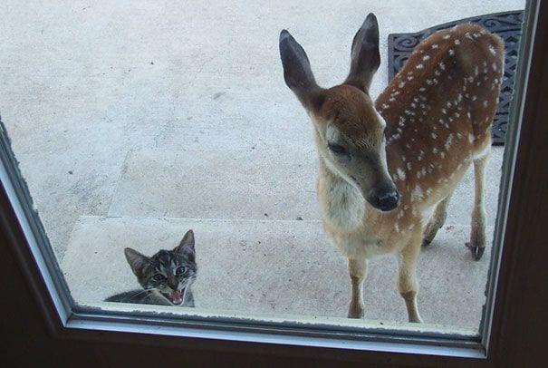 animales_entrar_casa_18