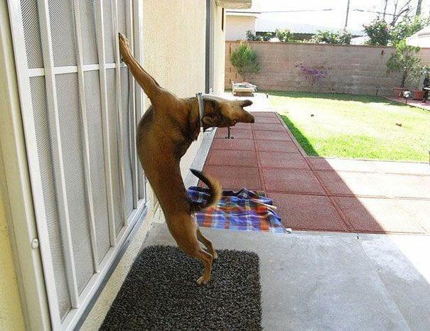 animales_entrar_casa_2