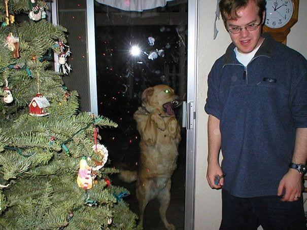 animales_entrar_casa_22