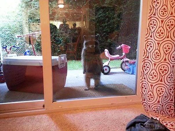 animales_entrar_casa_3