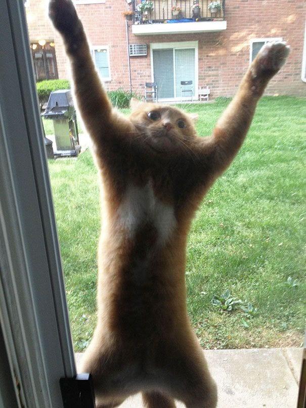 animales_entrar_casa_4