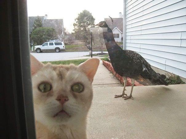animales_entrar_casa_7