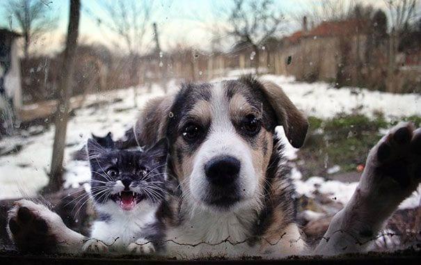 animales_entrar_casa_9