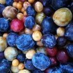 arbol de frutas 5