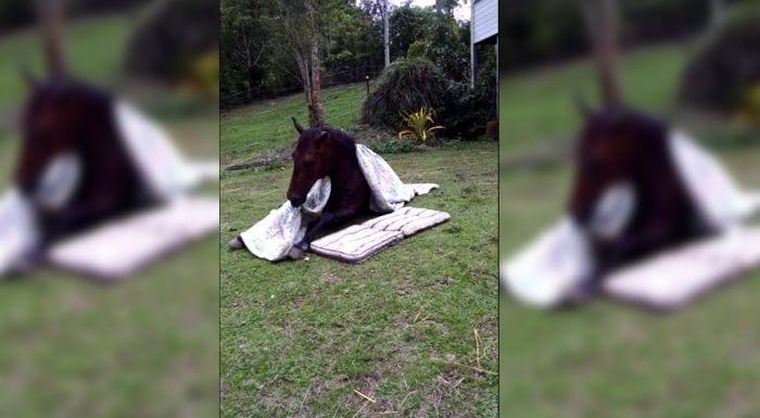 caballo se arropa