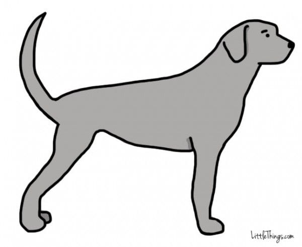 cola_perros_2