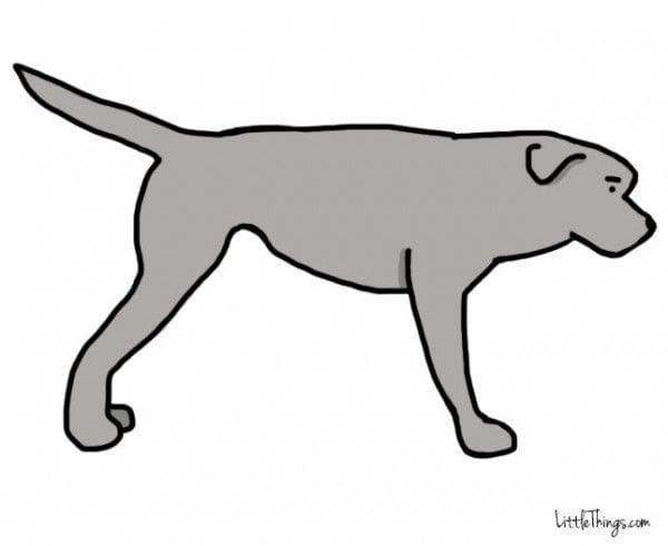 cola_perros_3