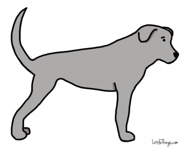 cola_perros_4