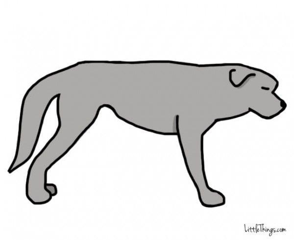 cola_perros_5