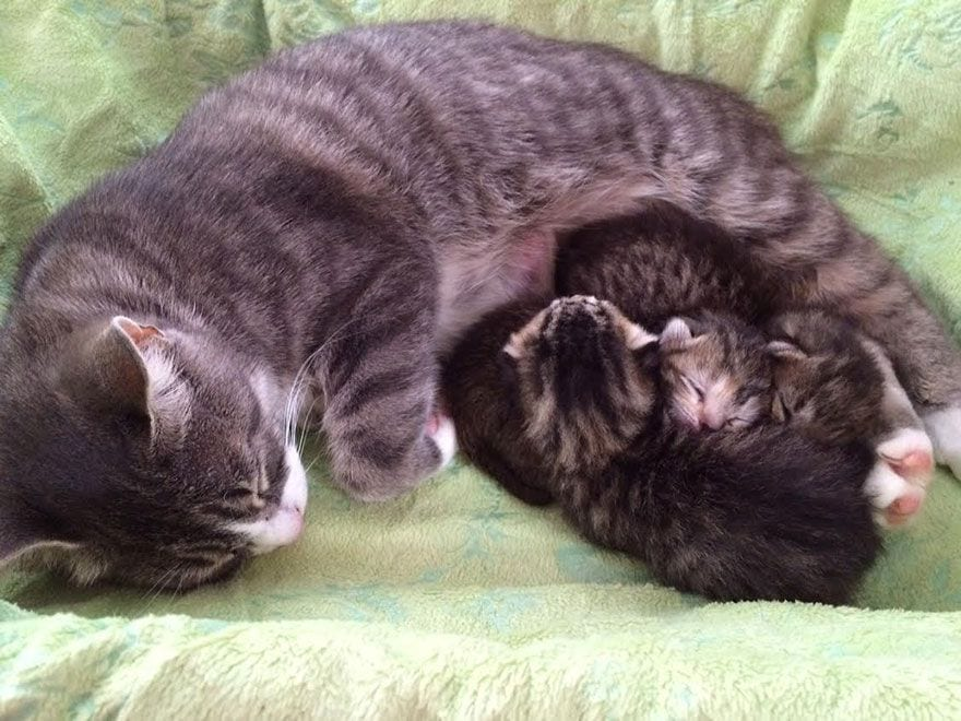 gata-adopta-gatitos-04