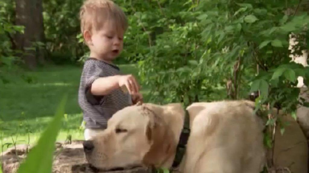 perro amigo nino