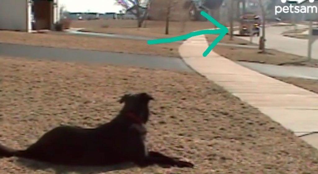 perro espera cole