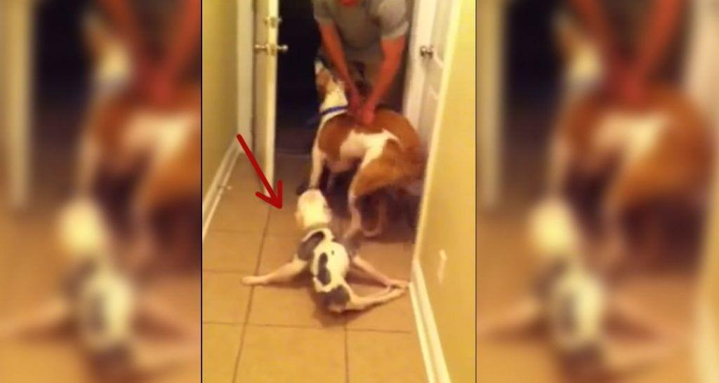perro paralisis