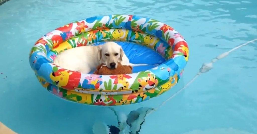 perro piscina relax