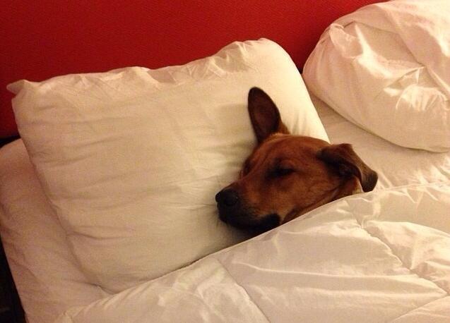 perros cama 15