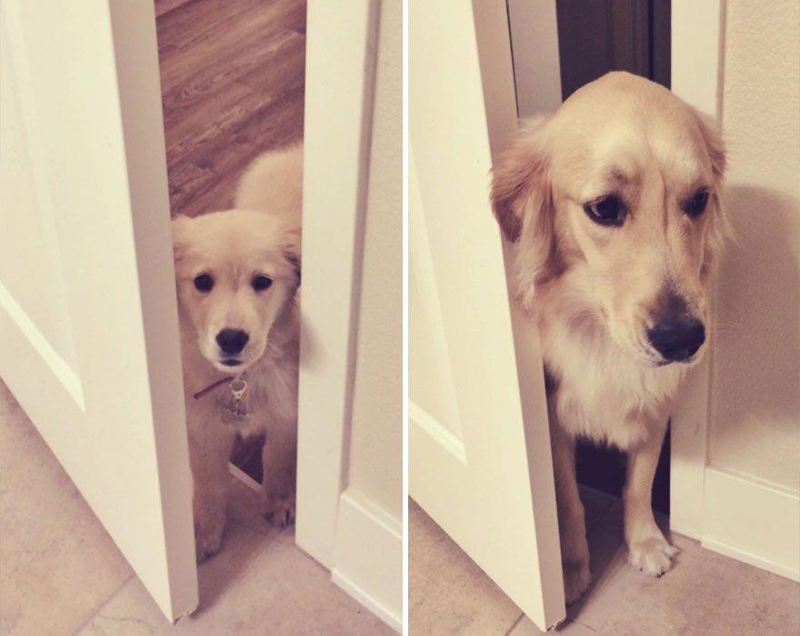 perros_antes_y_despues_13