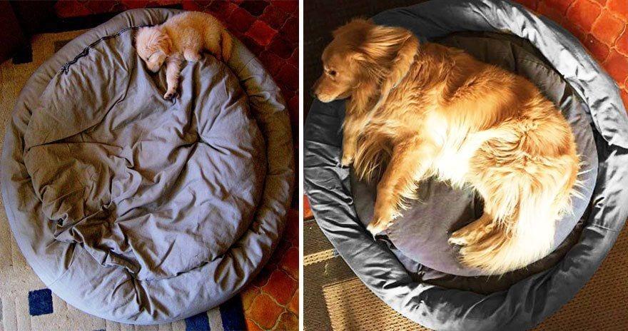 perros antes y despues 2