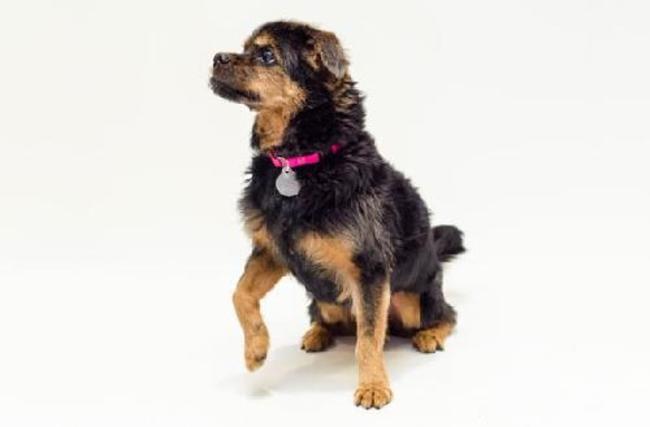 razones para adoptar perro 6