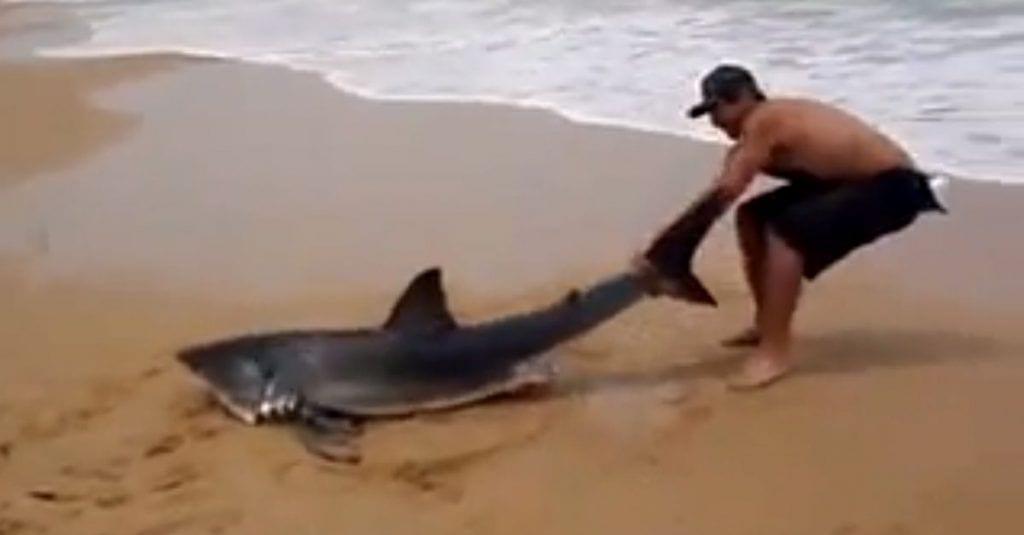 tiburon rescate