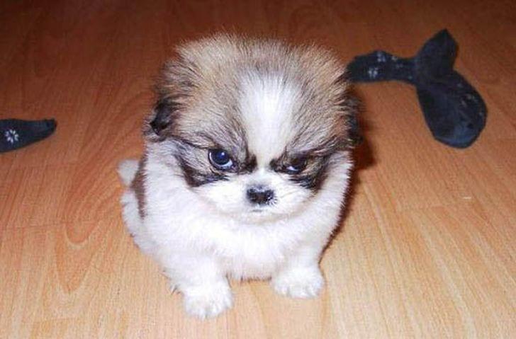 angry_dog