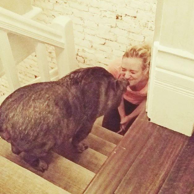 cerdos-8