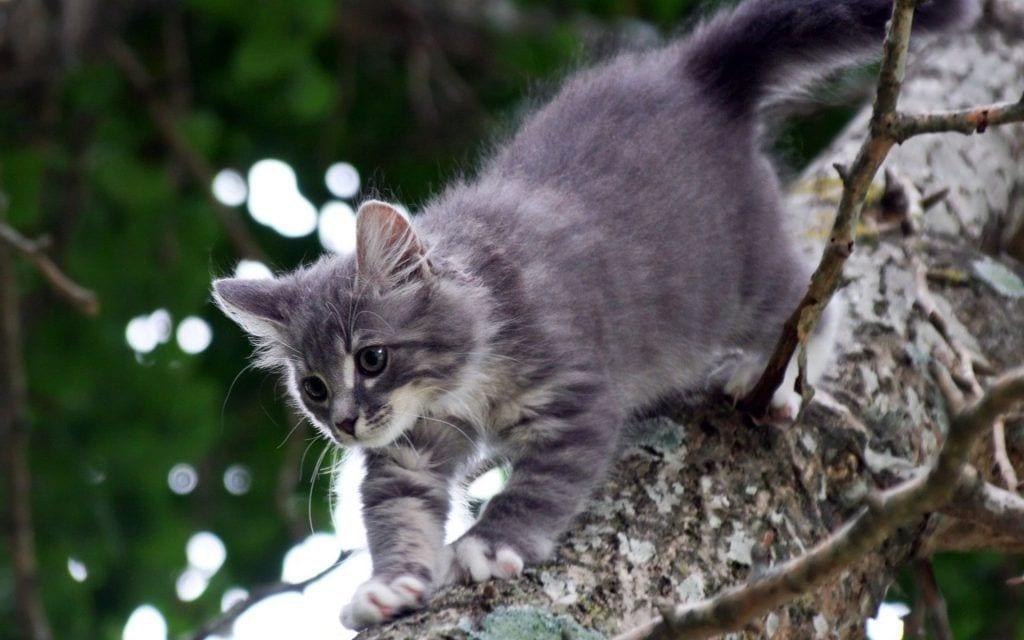 gatito-mascota-subido-arbol-gris
