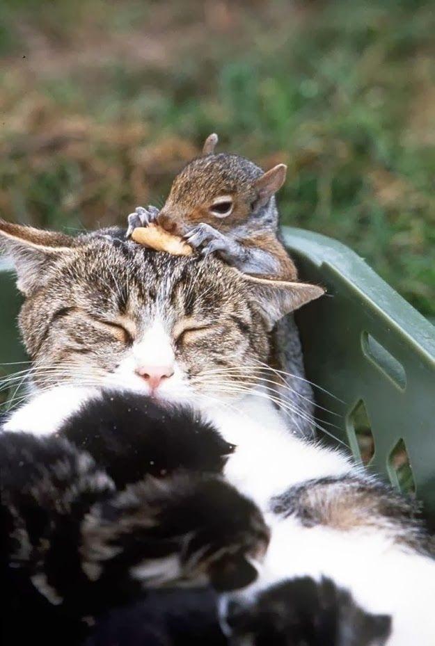 gata-durmiendo-gatitos-ardilla