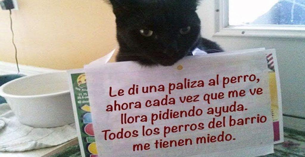 gato cartel