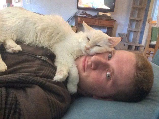 gato-mascota-blanca-dormir-encima-hombre