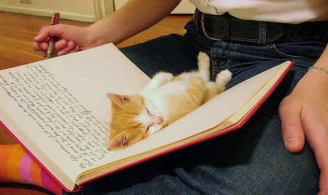 gato-pequeno-durmiendo-libro-blanco-rayado