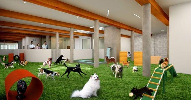 hotel-perros