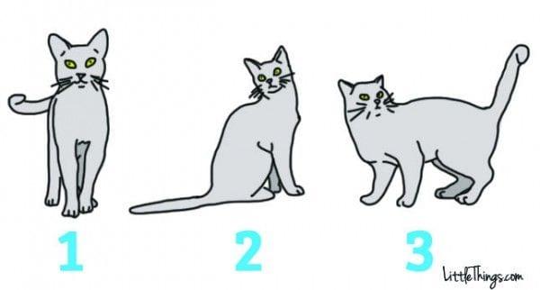lenguaje-gatos-01