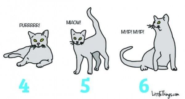 lenguaje-gatos-02