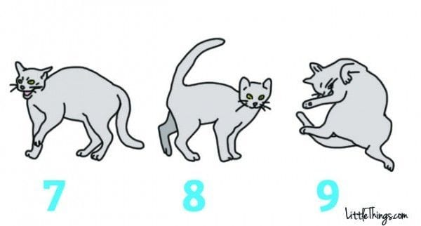 lenguaje-gatos-03