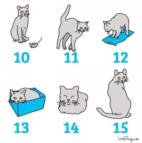 lenguaje-gatos-05