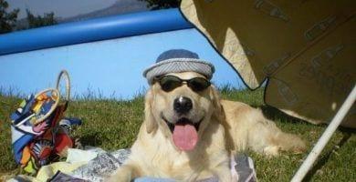 perro sombrilla