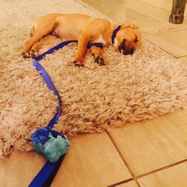 perros-cansados-17