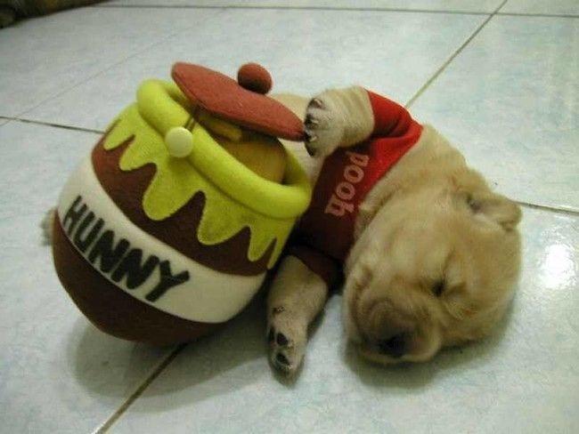 perros-cansados-7