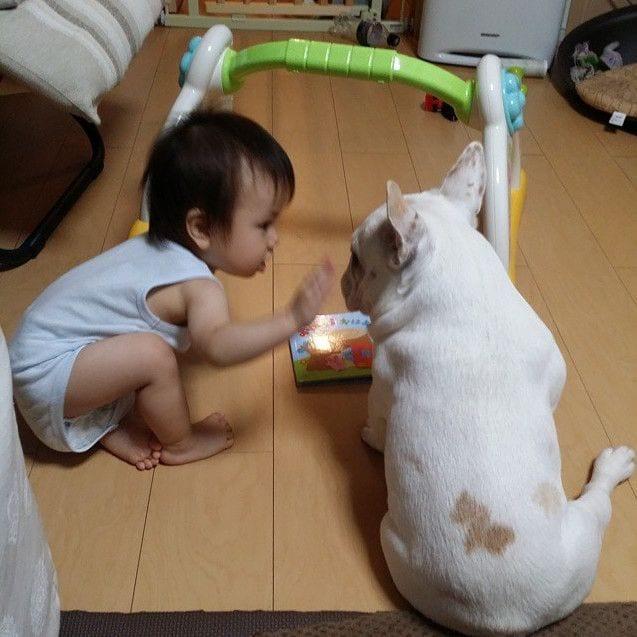 bebes_perros_10