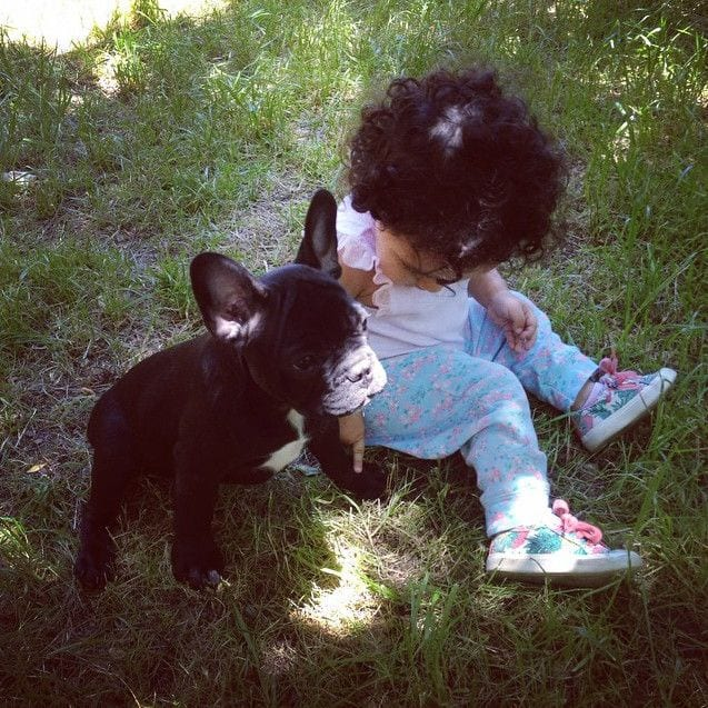 bebes_perros_16