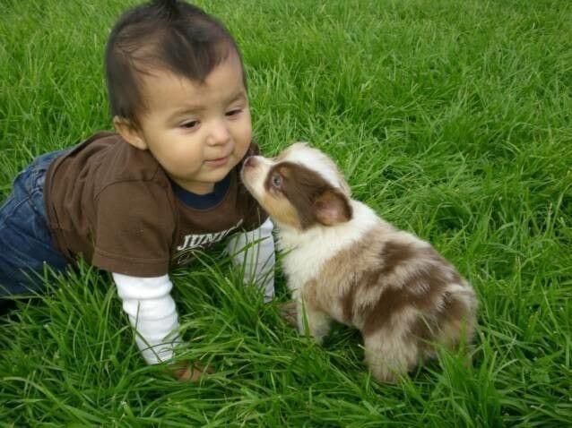 bebes_perros_2