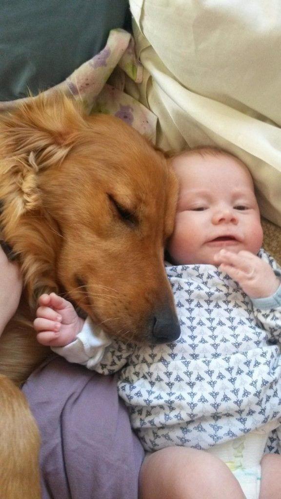 bebes_perros_22