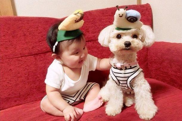 bebes_perros_7